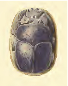 8. Heart Scarab of Yuya, photo from Davis, 'Tomb of louiya', pl. XLIII